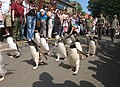 Penguin Parade - geograph.org.uk - 208475.jpg