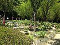 Peony garden in Miyajidake Shrine 3.JPG