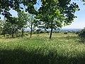 Perchtoldsdorfer Heide, Bild 13.jpg