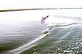 Perdido Bay Dolphin Baby.jpg