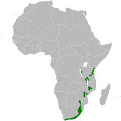 Phylloscopus ruficapilla distribution map.png