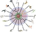 Phylogenetic analysis of the whole-genomes of 6 reptilian species and 10 additional vertebrate species.jpg