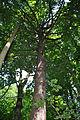 Pidhorodne-modryna-n1-15058016.jpg