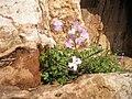 PikiWiki Israel 11930 Banias Nature Reserve.JPG