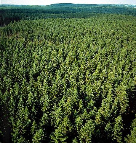 Barrskog (Sverige).