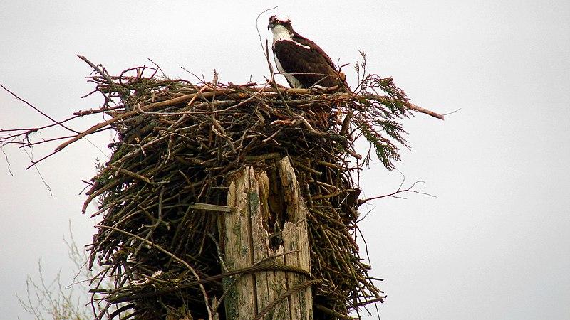 File:Pitt Meadows, BC, Canada - panoramio.jpg