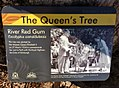 Placard - Queens Tree - Kings Park WA.jpg