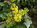 Plante du Jardin du Luxembourg 4.JPG