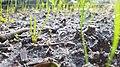 Plants growing in soil.jpg