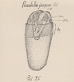 Plumatella fungosa Poll 1.png