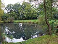 Pond, Coate Water country park, Swindon - geograph.org.uk - 572328.jpg