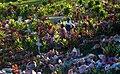 Port Vila Cemetery (Imagicity 243).jpg