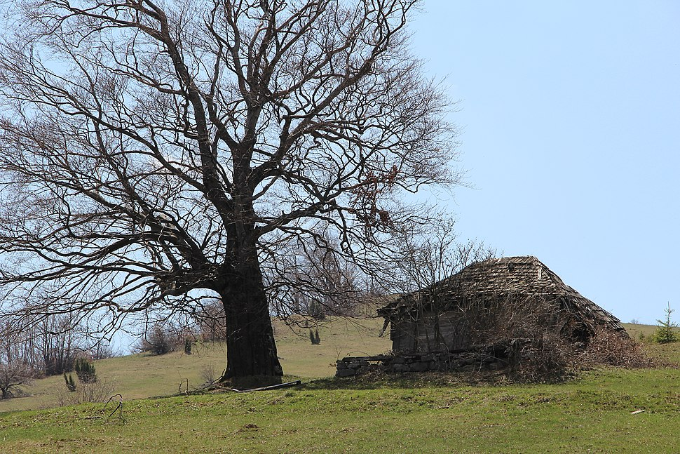 Povlen - zapadna Srbija - severni obronci Malog Povlena - mesto Bele vode - napusteni katun 1