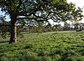 Powderham Deer Park - geograph.org.uk - 1571086.jpg