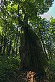 Prírodná rezervácia Borsukov vrch, Národný park Poloniny (14).jpg