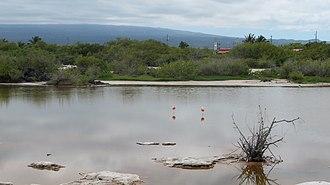 Puerto Villamil - Poza de los Flamingos