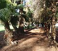 Public park in Cupertino California with trees and walkway.JPG