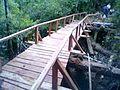 Puente de Alerce.jpg