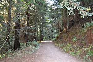 Purisima Creek Redwoods Open Space Preserve - Image: Purisima Creek Trail 11