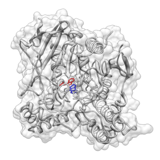 Stacking (chemistry) - Crystal structure of Tacrine bound to acetylcholinesterase (PDB accession: 1ACJ) visualized using UCSF Chimera. A pi stacking interaction between Tacrine (blue) and Trp84 (red) is proposed.