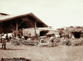 Queensland State Archives 2301 Unloading cane from drays at North Isis Sugar Mill 16 September 1896.png