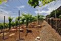 Quinta das Vinhas ^ Cottages, Estreito da Calheta, Madeira, Portugal, 27 June 2011 - Top vineyards - panoramio (1).jpg