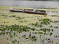 Rabaskas parmi les nénuphars. - Rabaskas,voyageur's canoe among the water lilys. - panoramio.jpg