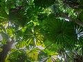 Rainforest Regenwald Australia (22766738397).jpg