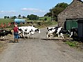 Ready for milking - geograph.org.uk - 546020.jpg