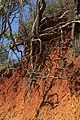 Red Cliffs of Scarborough continues to erode-4 (33656194415).jpg