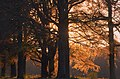 Red sunset and red beechleaves, a perfect combination and spectacular light - panoramio.jpg