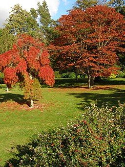 Red trees, Exbury Gardens - geograph.org.uk - 1011786