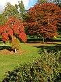 Red trees, Exbury Gardens - geograph.org.uk - 1011786.jpg