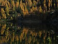 Reedsee, 1832 m, with larches in autumn.JPG