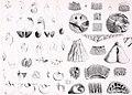 Researches sur les Brachiopodes. Annales des sciences naturelles, 1847 (17785468713).jpg