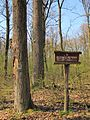 Rezerwat przyrody Kozi Bór.jpg
