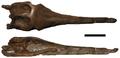 Rhacheosaurus.png