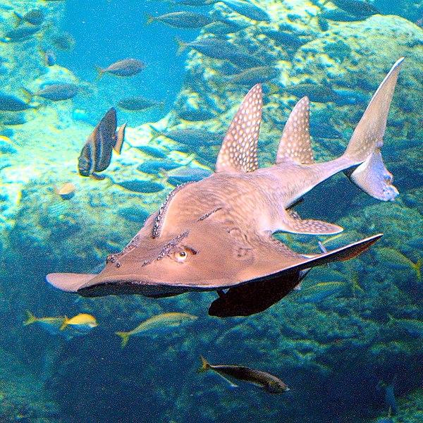 Dangerous water Animals: unusual marine animals