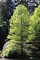 Rhododendronpark Bremen 20090513 092.JPG