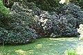 Rhododendronpark Bremen 20090513 121.JPG