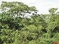 Ribeirão do Agudo com a mata ainda preservada - panoramio.jpg