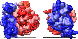 Ribosomal RNA - Three-dimensional views of the ribosome, showing rRNA in dark blue (small subunit) and dark red (large subunit). Lighter colors represent ribosomal proteins.