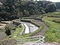 Rice terraces-Nishihata,Ikoma.jpg