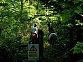 Riders in the woods - geograph.org.uk - 193671.jpg