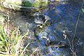 RioMajaceite0161.jpg
