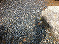 River made of rocks in the Genevieve Green Gardens at the Ewing Cultural Center.jpg
