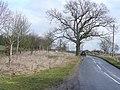 Road to Norton Lindsey - geograph.org.uk - 1771031.jpg