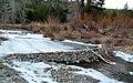 Rock Beaver Dam on Bear Creek, Jan. 2011 Guzzi.jpg