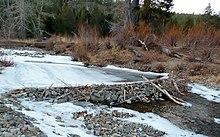 Beaver dam - Wikipedia