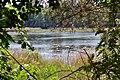 Rokyni Lutskyi Volynska-Kraievyd nature reserve-northeastern shore of the lake-3.jpg